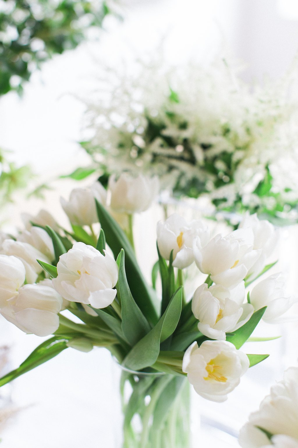 white tulips in a clear vase