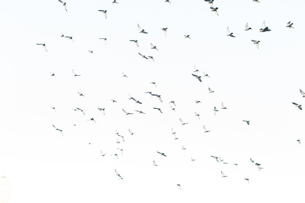 Birds flying overhead in the blue sky in Pittsburgh