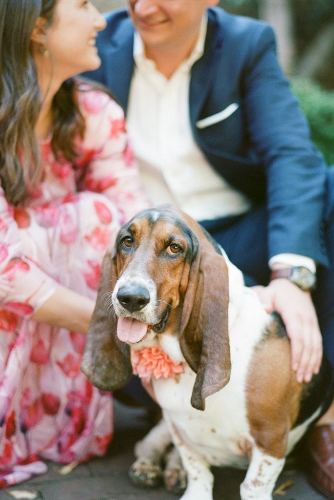 Hound dog and couple during engagement photos at the Carlyle House
