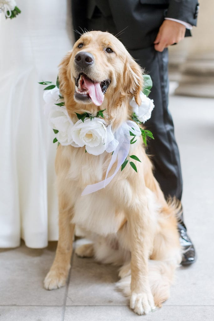 Floral dog collar for wedding: Timeless Blush and Gold Wedding at The Pennsylvanian by Lauren Renee Photography