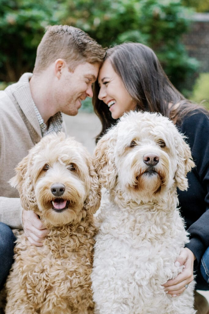 Labradoodle and golden doodle posing with their parents mini sessions at Mellon Park